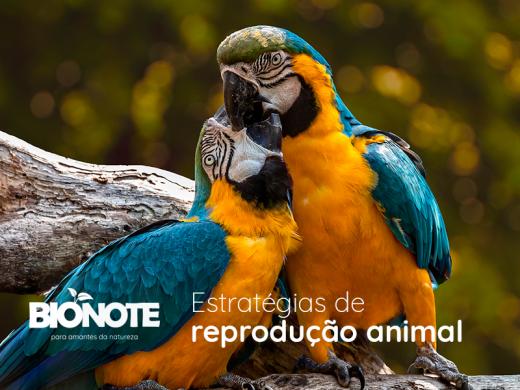 Estratégias de reprodução animal